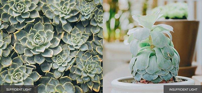 how to keep plants alive sunlight etiolation