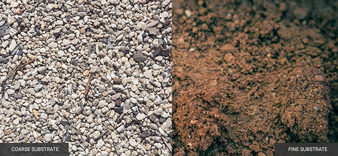 how to keep plants alive soil gravel drainage